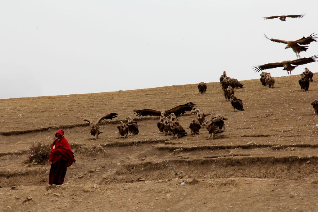 sky burial Sky burial is a funeral practice in which a human corpse is placed on a mountaintop to decompose while exposed to the elements or to be eaten by scavenging animals, especially carrion birds.